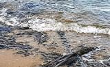 Gm. Darłowo. Bałtyk odkrył kamienny las sprzed kilku tysięcy lat. Wicie ZDJĘCIA