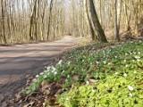 Wiosna w Kościerzynie i okolicach. Zobacz, jak zmienia się krajobraz [ZDJĘCIA]