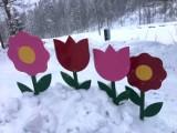 Kolorowe kwiaty  w zasypanym śniegiem Szczyrku Salmopolu