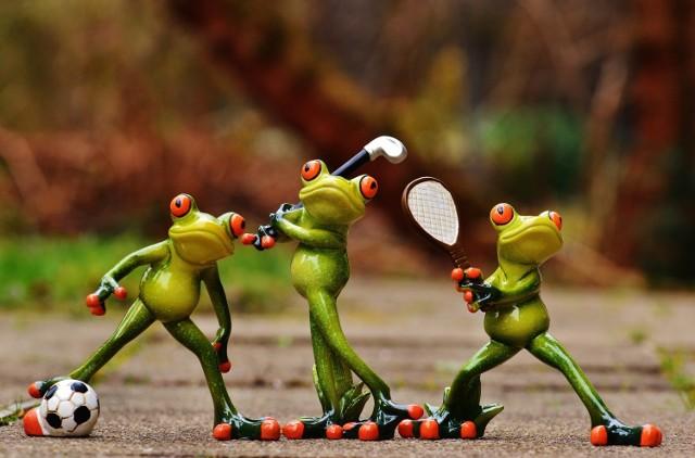 Na zdjęciu widzisz żaby grające w piłkę nożną, golfa i tenisa. W artykule zobaczysz listę najpopularniejszych filmików sportowych na polskim YouTube.