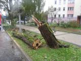 Przewrócone drzewo na ul. Wczasowej w Ustce. Nikomu nic się nie stało