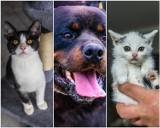Koty i psy do adopcji. Znajdziesz je w Fundacji Pod Psią Gwiazdą