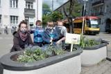 Społecznicy z Pragi sadzą kwiaty z zaniedbanych donicach i klombach