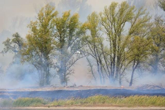 Pożar łąk i lasów za Odrą
