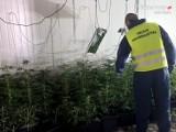 Policja z Rudy Śląskiej zlikwidowała ogromną plantację marihuany. Zabezpieczono prawie 400 krzaków konopi