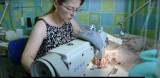 """Rzemieślnicy z Bełchatowa o swojej pracy. Akcja """"Tylko dobre rzemiosło"""" zachęca, by korzystać z ich usług"""