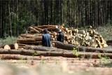 Oleśnica. Wywóz drewna z lasu? Możliwy, ale tylko za przyzwoleniem