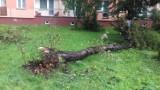 Silny wiatr powalił drzewa a woda wylała się na drogę krajową nr 44 w Przeciszowie