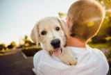 Karkonoski Park Narodowy zabrania spacerów z psami. Wszystko przez wilki