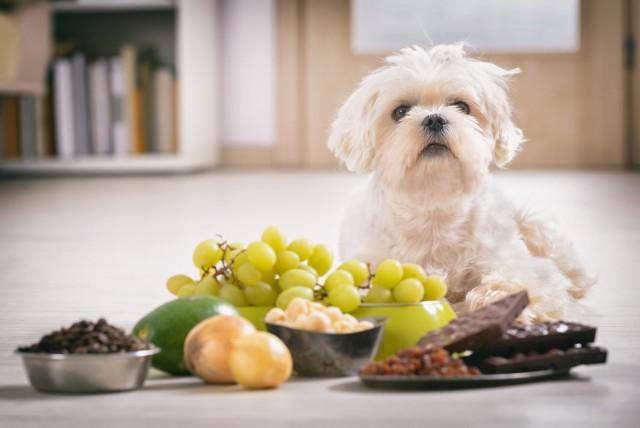 Wszyscy chcemy aby nasz pupil był zdrowy i radosny. Niestety, co jest dobre dla ludzi, może szkodzić zwierzętom. Oto lista 10 produktów, które nie powinny się znaleźć w misce twojego psa. Zobacz je w galerii --->