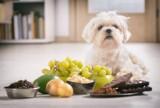Nie dokarmiaj tym psa! Od tych produktów może się ciężko rozchorować