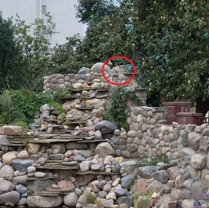 Test na spostrzegawczość - znajdź kota na zdjęciu. Niewielu to potrafi!