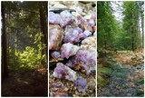 Majówka z Karkonoskim Parkiem Narodowym. Wybierz się na karkonoską wyprawę [SZCZEGÓŁY]