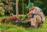 Zakładamy przydomowy ogródek. Jakie narzędzia ogrodowe warto przygotować?