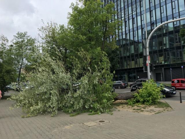 Powalone drzewo blokowało chodnik przez tydzień. Po naszej interwencji zniknęło w jeden dzień