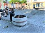 Tornado w centrum Goleniowa? Mnóstwo powyrywanych kwiatów