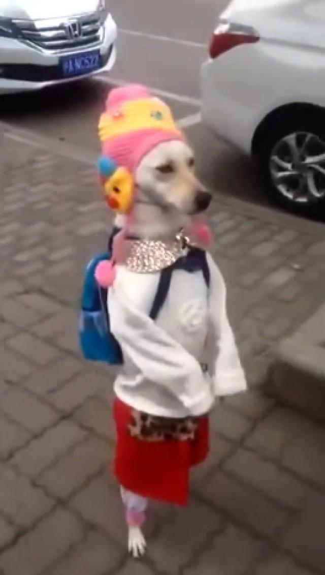 Ten pies wygląda jak dziewczynka