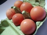 Bakteria salmonelli w partii jajek z Sokołowic pod Oleśnicą [OSTRZEŻENIE GIS]