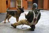 Skąd armia USA bierze psy bojowe? Z hodowli w gminie Rudniki [ZDJĘCIA]