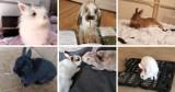 Dzień Królika 2021. Zobacz galerię zdjęć zwierzaków naszych czytelników! ZDJĘCIA