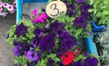Kwiaty i byliny na bazarze w Rzeszowie. Sadzonki na balkon i do ogrodu. Zobacz zdjęcia