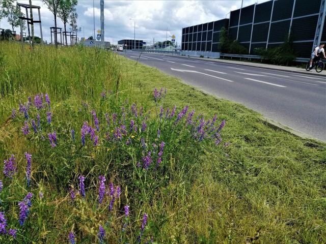 Przy 10 ulicach w Kielcach mamy kwietne łąki.