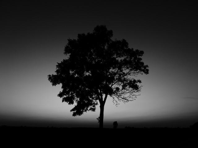 Jesienna przyroda na czarno-białych zdjęciach.