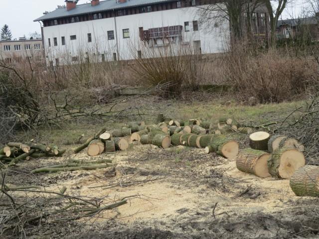 W centrum Ciechocinka ubyło drzew. Na prywatnej posesji u zbiegu ulic Lorentowicza i Raczyńskich w ruch poszły piły. Zniknęły drzewa, pojawił się duży plac. Pod zabudowę?