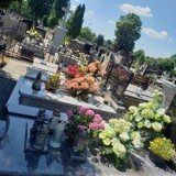 Zduńskowolanie dbają o groby bliskich. Niektóre nagrobki toną w kwiatach ZDJĘCIA, CEN