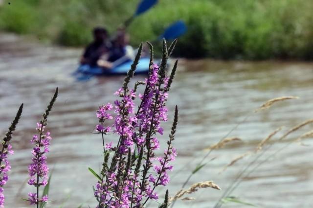Tragedia nad Skawą. Nie żyje kajakarz, który uczestniczył w spływie
