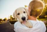 Do serca przytul psa, weź na kolana kota. Jak się mają nasze czworonogi w czasie pandemii? [Zdjęcia12.04.2021]