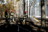 Pożar lasu na terenie Leśnictwa Dębinka pod Bydgoszczą. W akcji gaśniczej udział brał samolot
