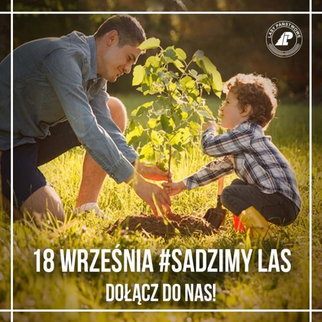 """Wieluń. Rusza akcja """"sadziMY"""". Już w piątek można odebrać sadzonki drzew"""