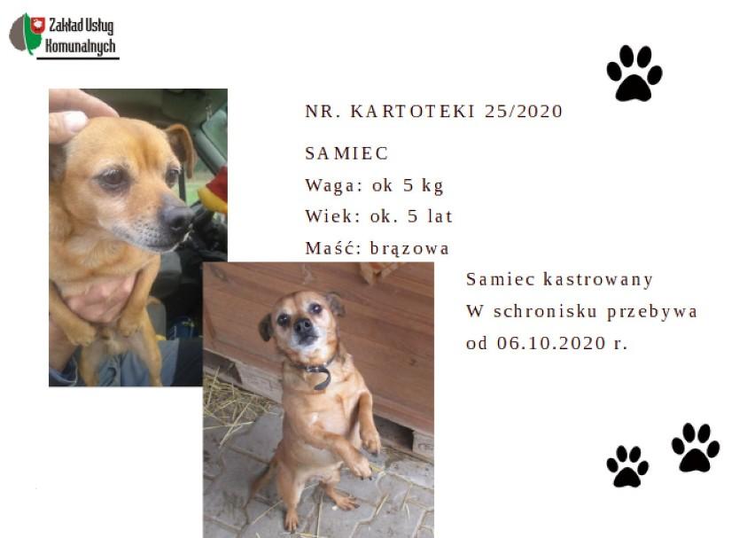 Zbąszyń: Psy do adopcji w schronisku dla zwierząt w Nowym Dworze - 9 grudnia 2020  [Zobacz zdjęcia czworonogów]