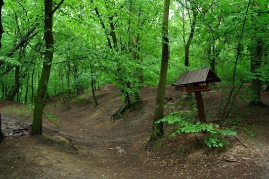 Las Bielański  Las zajmuje 151,83 ha powierzchni, mieści się w dzielnicy Bielany i jest pozostałością porastających kiedyś Mazowsze naturalnych puszcz. Malownicza przyroda jest charakterystyczna z racji położenia na czterech dawnych tarasach zalewowych Wisły. Liczne szlaki piesze wśród wąwozów i skarp opowiadają o przyrodzie dawnych tarasów rzecznych. Atrakcją jest tez klasztor Kamedułów, który istnieje tu już od XVII wieku.  Czytaj koniecznie: Dziki obiad z lasu