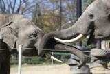 Śląski Ogród Zoologiczny wciąż jest zamknięty dla zwiedzających. Kiedy będzie czynne zoo w Chorzowie?