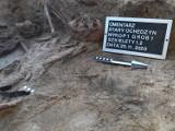 Ekshumacja grobu żołnierzy Wieluńskich Batalionów Obrony Narodowej. Specjaliści IPN wrócili na cmentarz w Starym Ochędzynie