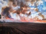 Trwa seria pożarów pól w powiecie szamotulskim. W sobotę spłonęło 70 hektarów! [ZDJĘCIA]