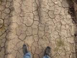 Dotacje dla rolników, którzy ponieśli straty w wyniku klęski żywiołowej. Od 11 marca można składać wnioski
