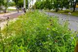 Więcej łąk kwietnych w Sopocie. Będzie ich ponad dwadzieścia. Gdzie? O tym zdecydują mieszkańcy