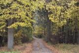 Jesienny spacer w Lipach w gm. Stara Kiszewa. Malownicza miejscowość zaprasza [ZDJĘCIA]