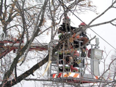 Urzędnicy twierdzą, że wycinane drzewa zagrażają bezpieczeństwu na osiedlach. Fot. Zbigniew Marszałek