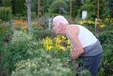 Chcesz kupić ogródek działkowy? Lepiej się pospiesz, bo chętnych jest wielu, a ceny wysokie!
