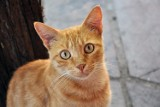 O syndromie kopniętego kota, czyli że złość jest jak śniegowa kula