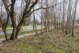 Park Aleksandry będzie większy i stanie się częścią Plant Podgórskich