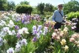 W ogrodzie Józefa Koncewicza znów jest magicznie. Właśnie kwitną tu setki irysów. Takiego morza kwiatów dawno nie widzieliście