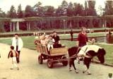 Zdjęcia wrocławskiej pergoli z lat 70., 80. i 90. XX wieku (ZOBACZ)