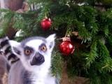 Świąteczna zbiórka dla zwierząt z warszawskiego Ogrodu Zoologicznego. Prezenty można przynosić do końca grudnia