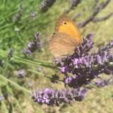 Urlop - wyluzuj, poczuj się jak motyl [ZDJĘCIA]