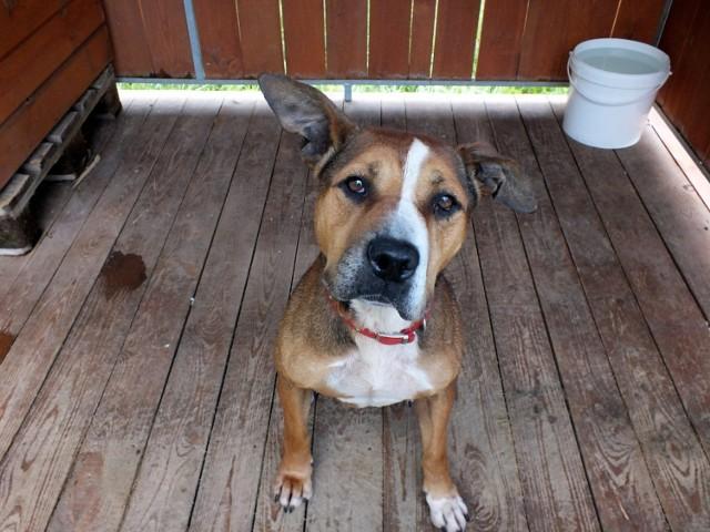 Dzięki stronie internetowej Fundacji NaszeZoo.pl, można umówić się z jej podopiecznymi na walentynkową randkę, a także sprezentować im psie smakołyki